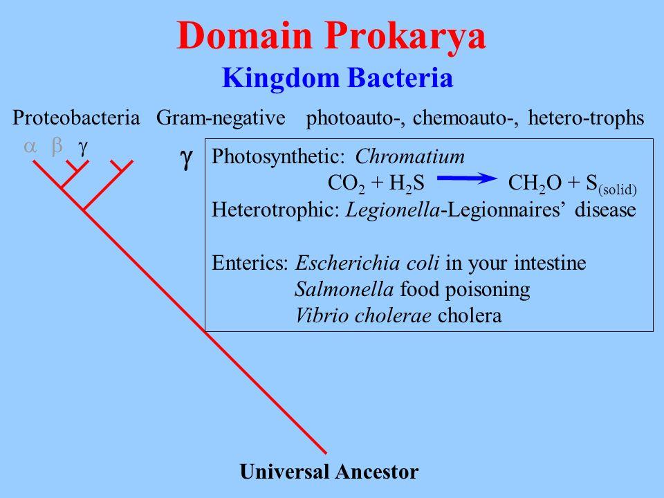 Domain Prokarya Kingdom Bacteria Universal Ancestor Proteobacteria Gram-negativephotoauto-, chemoauto-, hetero-trophs Photosynthetic: Chromatium CO 2