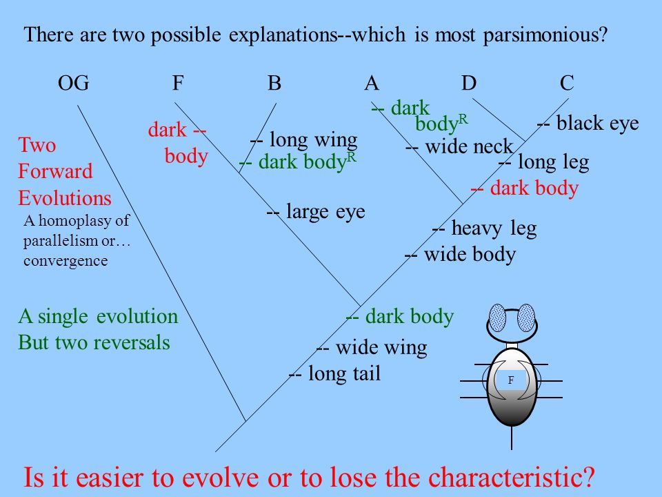 -- wide wing -- long tail There are two possible explanations--which is most parsimonious? -- heavy leg -- wide body -- large eye -- long leg -- dark