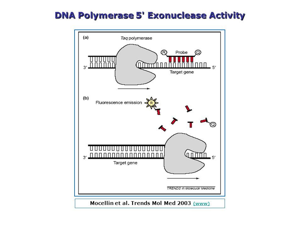 Mocellin et al. Trends Mol Med 2003 (www) (www) DNA Polymerase 5' Exonuclease Activity