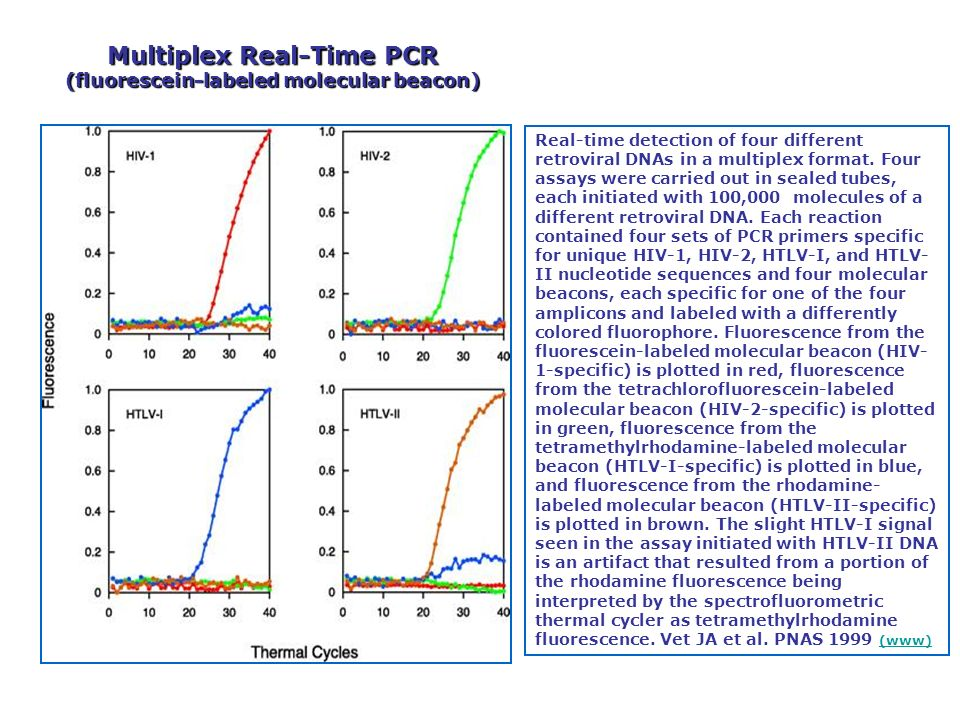 Real-time detection of four different retroviral DNAs in a multiplex format. Four assays were carried out in sealed tubes, each initiated with 100,000