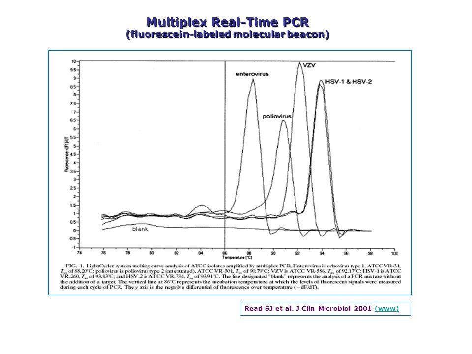 Read SJ et al. J Clin Microbiol 2001 (www) (www) Multiplex Real-Time PCR (fluorescein-labeled molecular beacon)