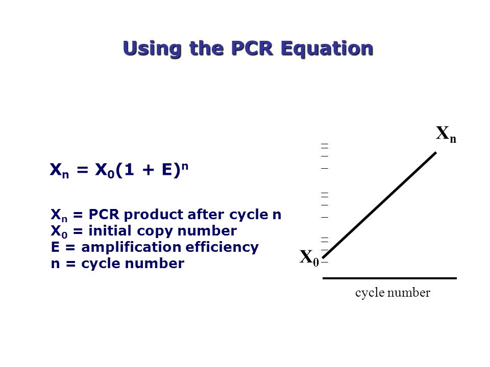 Using the PCR Equation X n = X 0 (1 + E) n X n = PCR product after cycle n X 0 = initial copy number E = amplification efficiency n = cycle number XnX