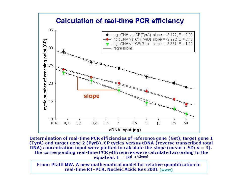 Determination of real-time PCR efficiencies of reference gene (Gst), target gene 1 (TyrA) and target gene 2 (PyrB). CP cycles versus cDNA (reverse tra