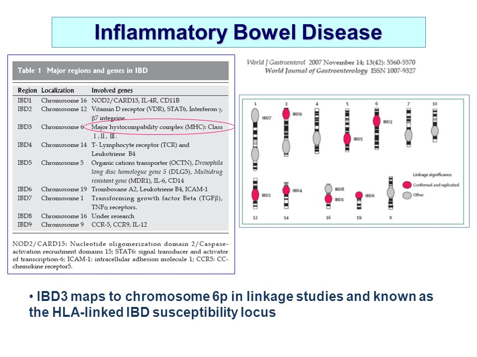 IBD3 maps to chromosome 6p in linkage studies and known as the HLA-linked IBD susceptibility locus Inflammatory Bowel Disease