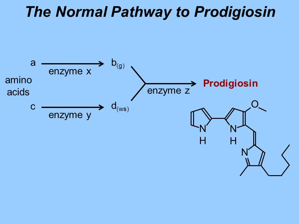 amino acids a c b (g) d (ws) Prodigiosin enzyme x enzyme y enzyme z The Normal Pathway to Prodigiosin O NHNH NHNH N