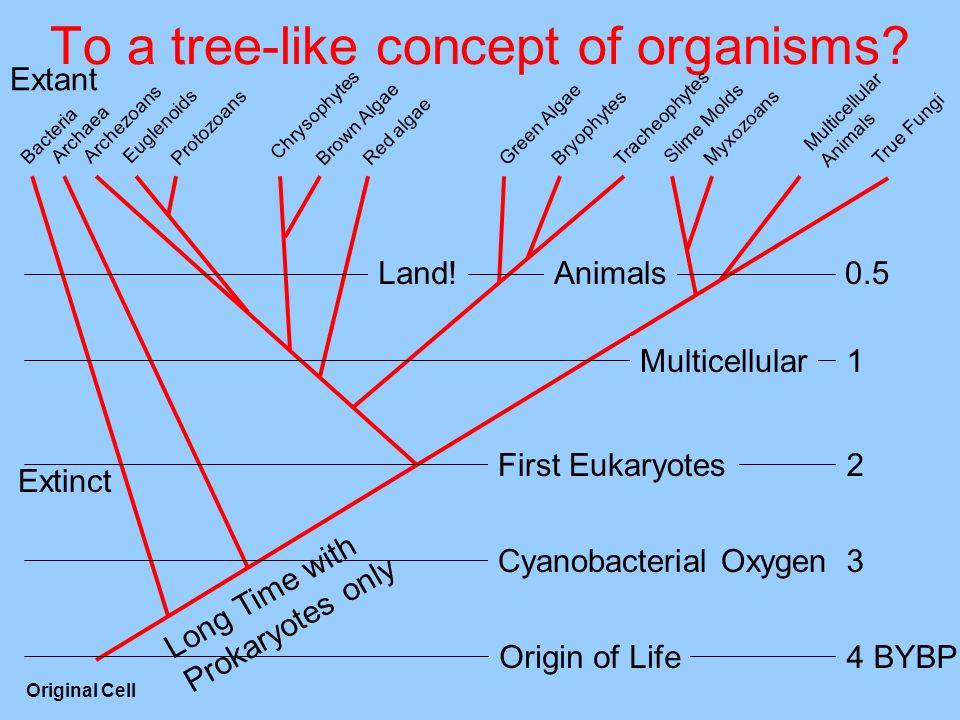 To a tree-like concept of organisms? Multicellular Animals MyxozoansProtozoans Tracheophytes Bryophytes True Fungi Slime Molds Red algae Brown Algae G
