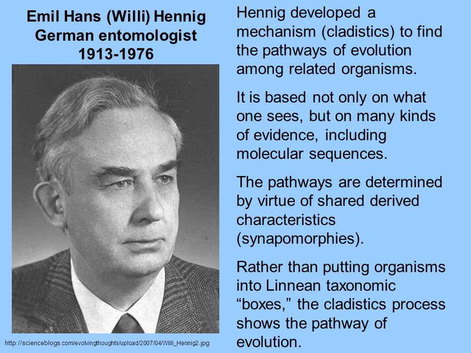 http://scienceblogs. com/evolvingthoughts/upload/2007/04/Willi_Hennig2.jpg Emil Hans (Willi) Hennig German entomologist 1913-1976 Hennig developed a m