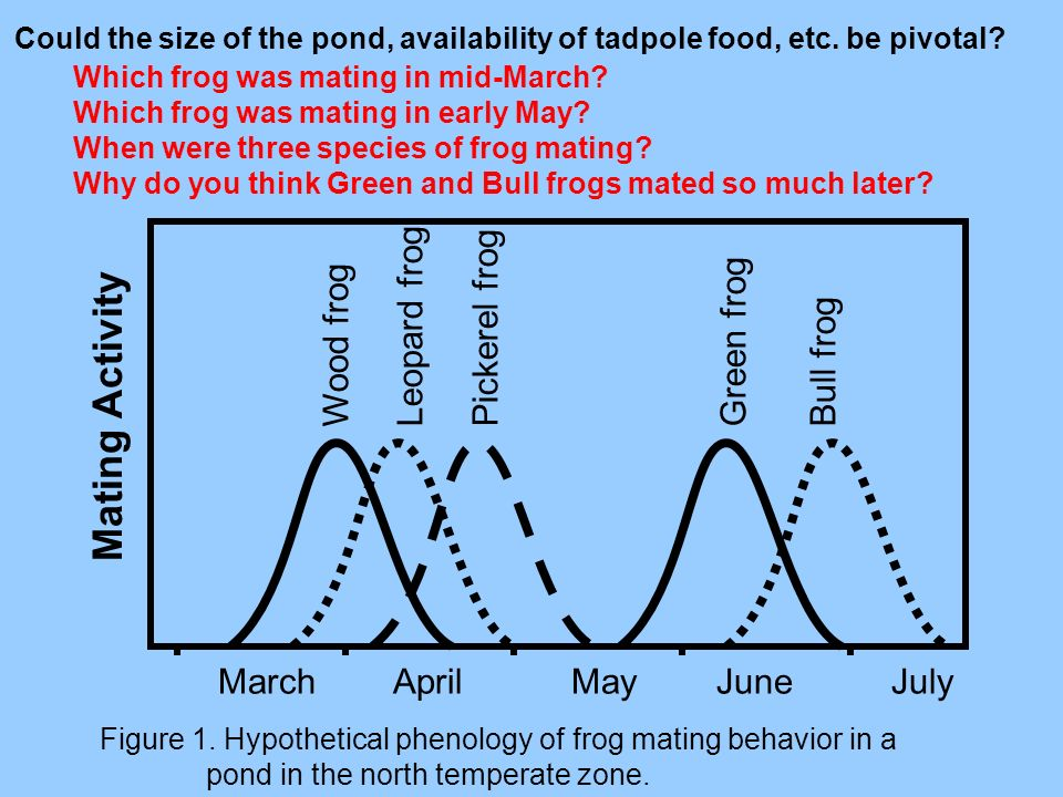 Figure 1. Hypothetical phenology of frog mating behavior in a pond in the north temperate zone. Mating Activity March April May June July Wood frog Le
