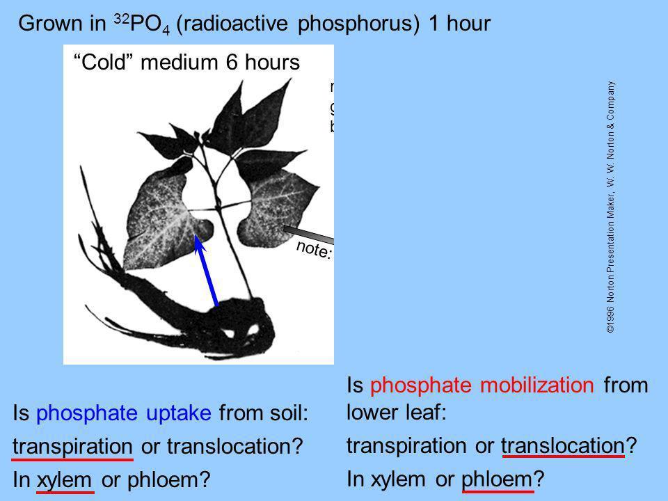 ©1996 Norton Presentation Maker, W. W. Norton & Company Grown in 32 PO 4 (radioactive phosphorus) 1 hour Cold medium 6 hoursCold medium 90 hours Is ph