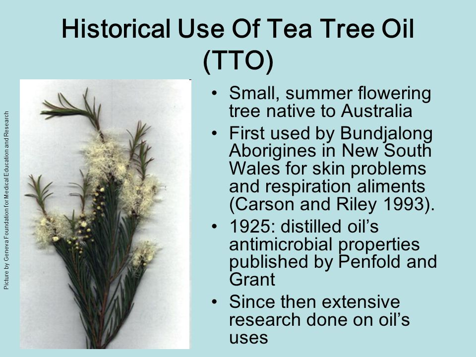 Historical Use Of Tea Tree Oil (TTO) Small, summer flowering tree native to Australia First used by Bundjalong Aborigines in New South Wales for skin