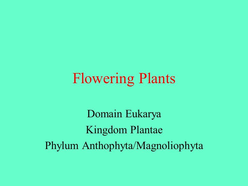 Flowering Plants Domain Eukarya Kingdom Plantae Phylum Anthophyta/Magnoliophyta