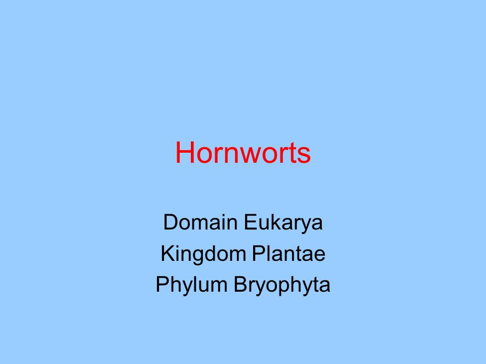 Hornworts Domain Eukarya Kingdom Plantae Phylum Bryophyta