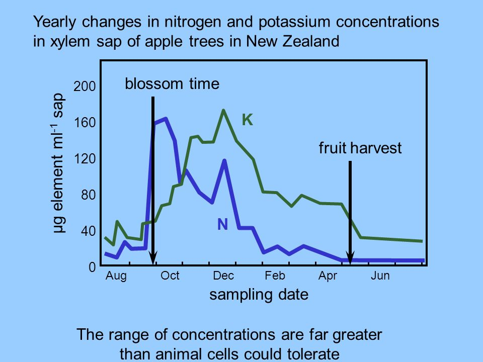 Yearly changes in nitrogen and potassium concentrations in xylem sap of apple trees in New Zealand The range of concentrations are far greater than an