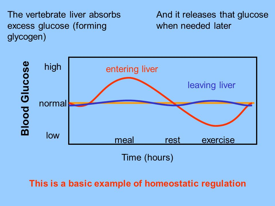 The vertebrate liver absorbs excess glucose (forming glycogen) And it releases that glucose when needed later This is a basic example of homeostatic r