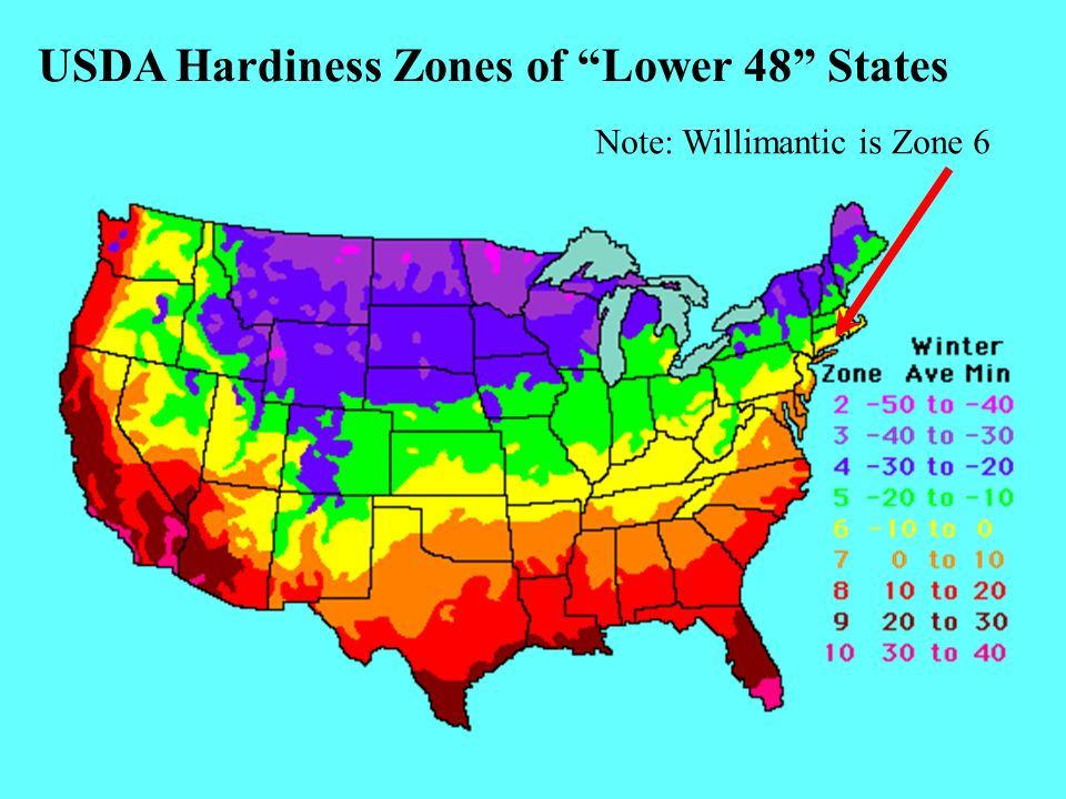 USDA Hardiness Zones of Lower 48 States Note: Willimantic is Zone 6