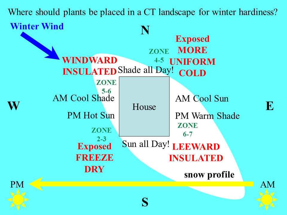 snow profile Where should plants be placed in a CT landscape for winter hardiness? N WE S House AMPM AM Cool Sun PM Warm Shade Shade all Day! Sun all