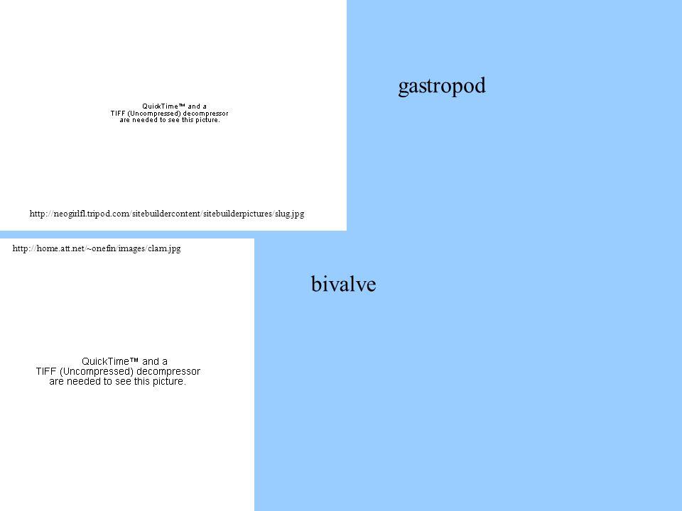 http://neogirlfl.tripod.com/sitebuildercontent/sitebuilderpictures/slug.jpg http://home.att.net/~onefin/images/clam.jpg bivalve gastropod
