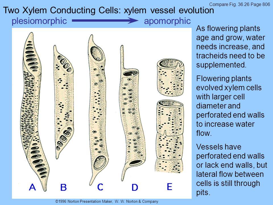 ©1996 Norton Presentation Maker, W. W. Norton & Company plesiomorphicapomorphic Compare Fig. 36.26 Page 806 Two Xylem Conducting Cells: xylem vessel e