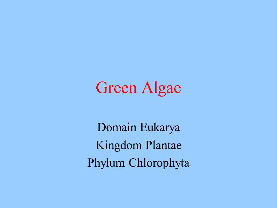 Domain Eukarya Kingdom Plantae Phylum Chlorophyta Green Algae