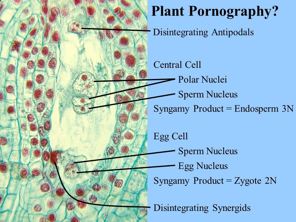 Plant Pornography.