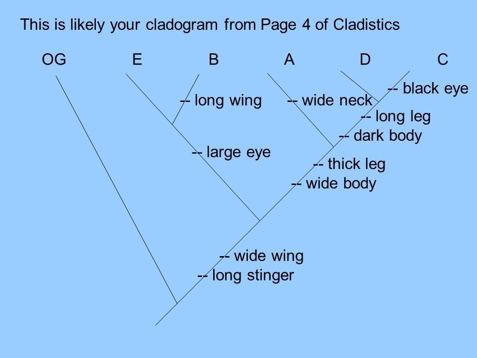 -- wide wing -- long stinger This is likely your cladogram from Page 4 of Cladistics -- thick leg -- wide body -- large eye -- long leg -- dark body -