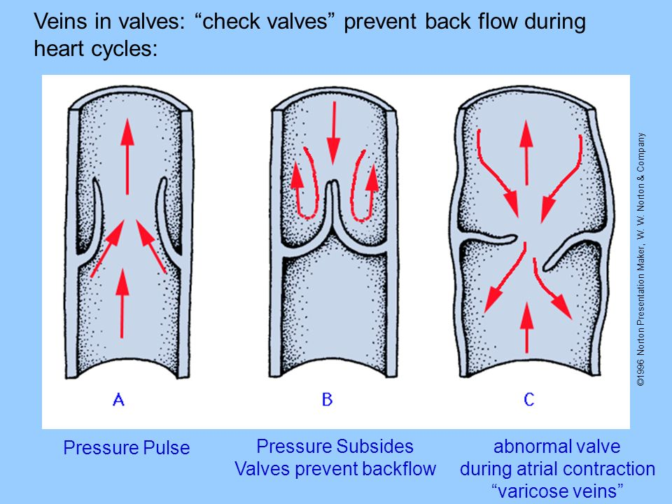 ©1996 Norton Presentation Maker, W. W. Norton & Company Veins in valves: check valves prevent back flow during heart cycles: Pressure Pulse Pressure S