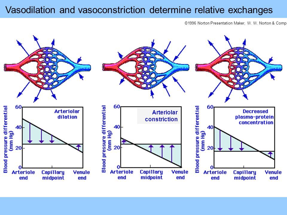 ©1996 Norton Presentation Maker, W. W. Norton & Company Arteriolar constriction Vasodilation and vasoconstriction determine relative exchanges