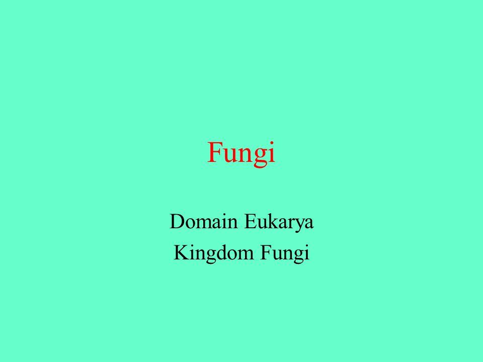 Fungi Domain Eukarya Kingdom Fungi