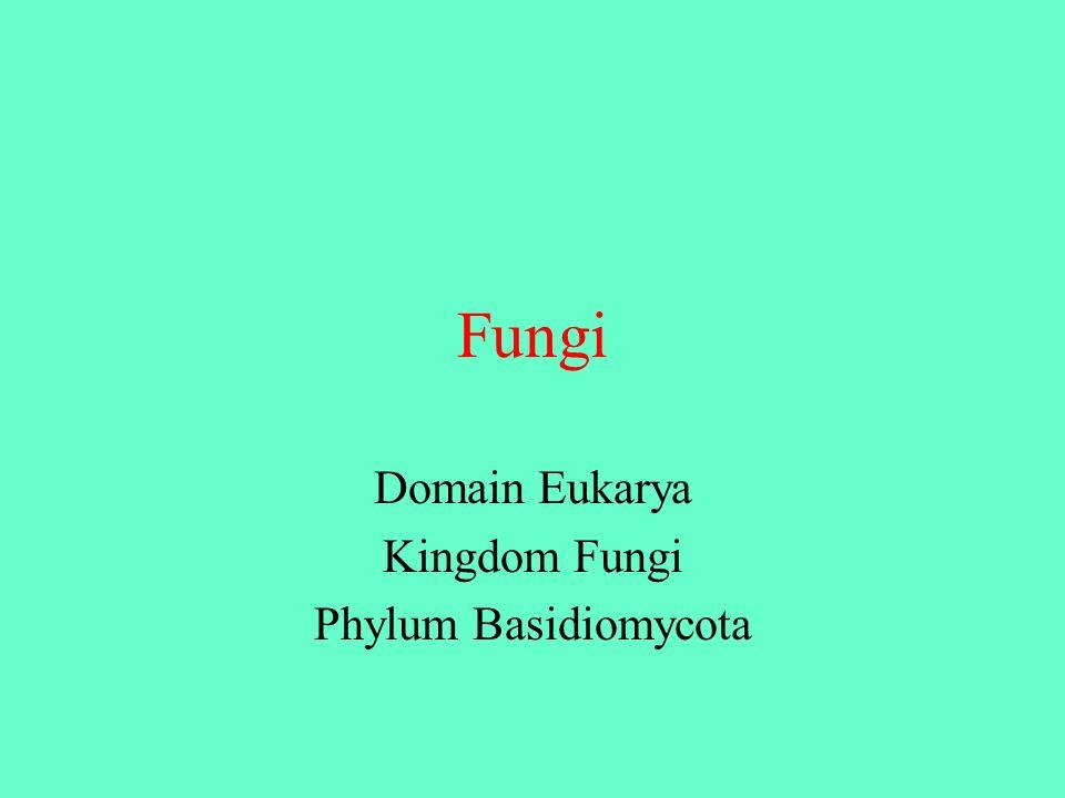 Fungi Domain Eukarya Kingdom Fungi Phylum Basidiomycota