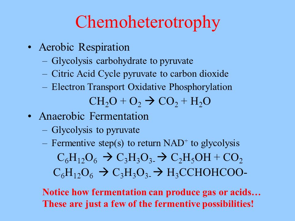 Chemoheterotrophy Aerobic Respiration –Glycolysis carbohydrate to pyruvate –Citric Acid Cycle pyruvate to carbon dioxide –Electron Transport Oxidative