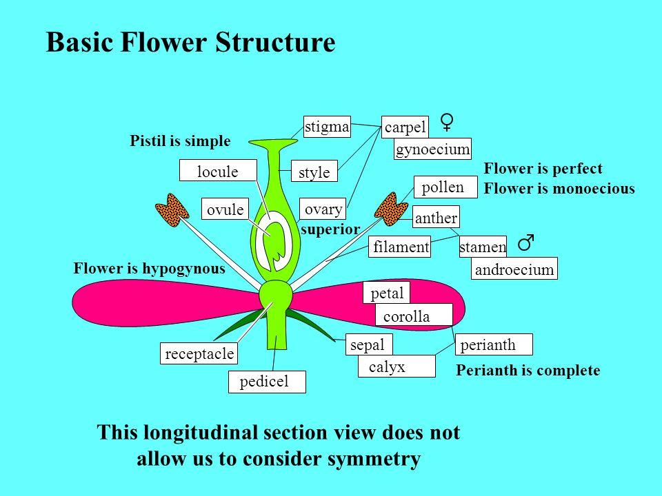 Basic Flower Structure stigma style ovary locule ovule carpel gynoecium pollen anther filamentstamen androecium petal corolla perianth sepal calyx rec