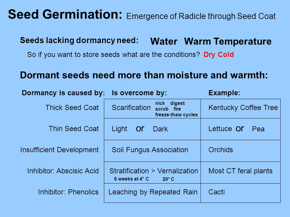 Seed Germination: Emergence of Radicle through Seed Coat WaterWarm Temperature So if you want to store seeds what are the conditions?Dry Cold Dormant