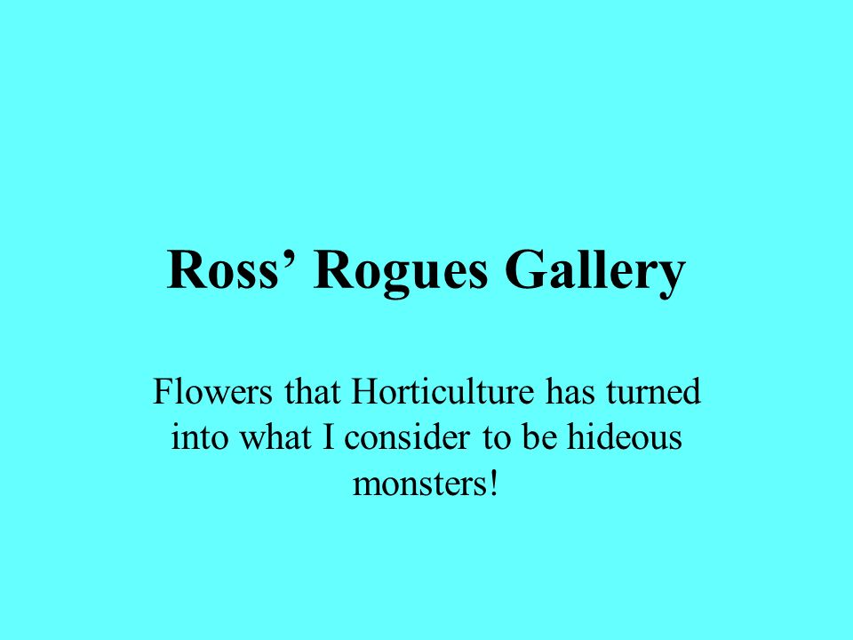 Ross Rogues Gallery Flowers that Horticulture has turned into what I consider to be hideous monsters!