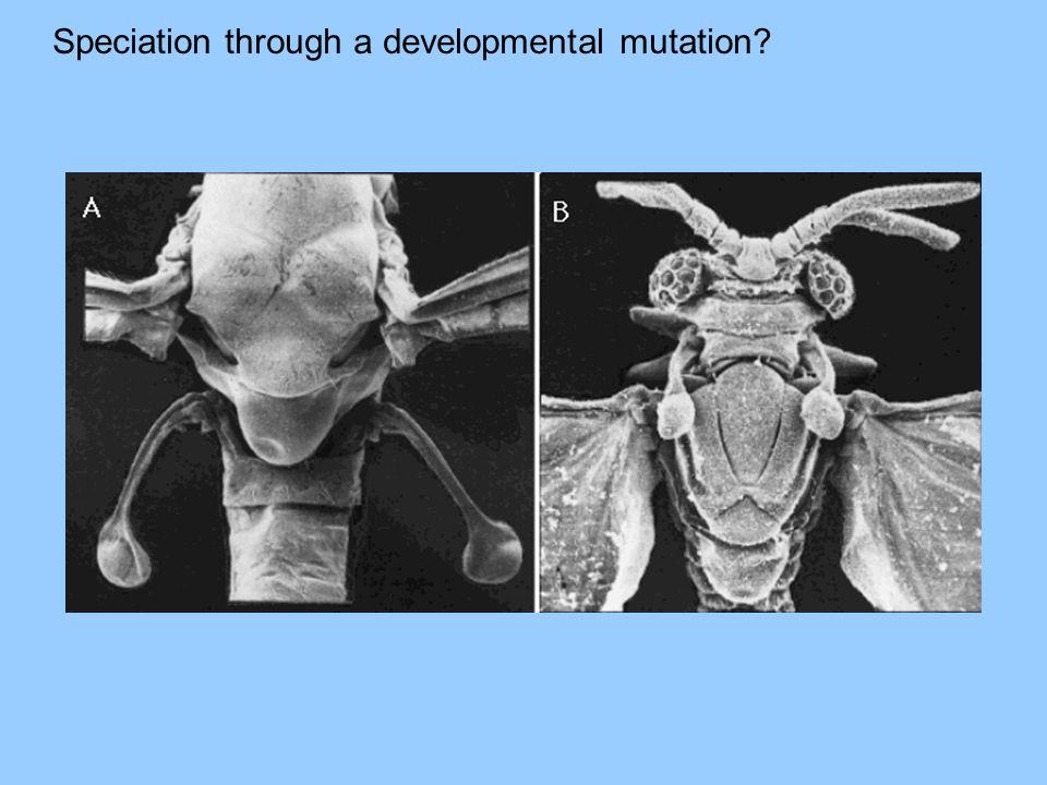 Speciation through a developmental mutation?