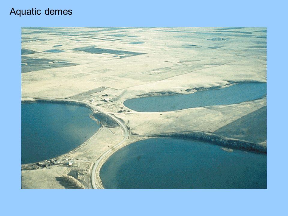 Aquatic demes