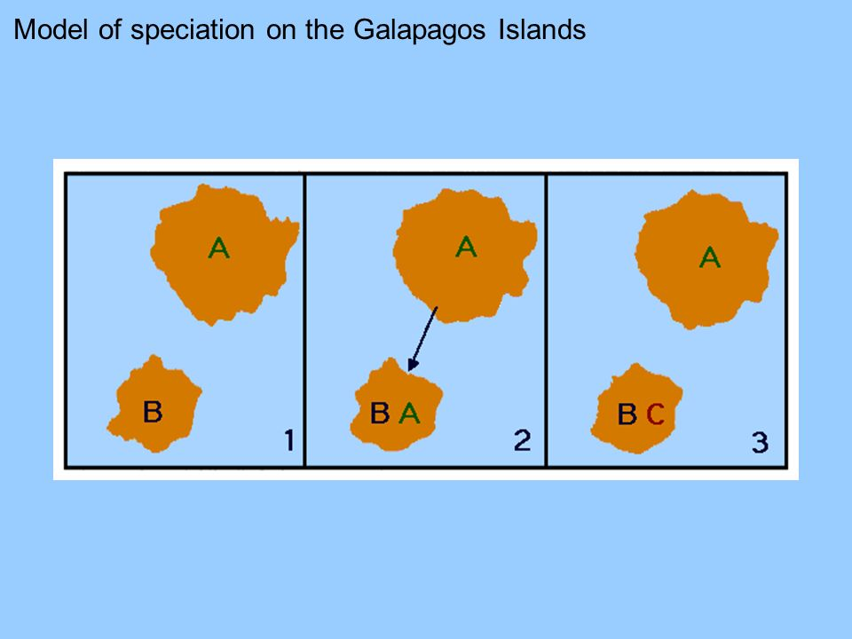 Model of speciation on the Galapagos Islands