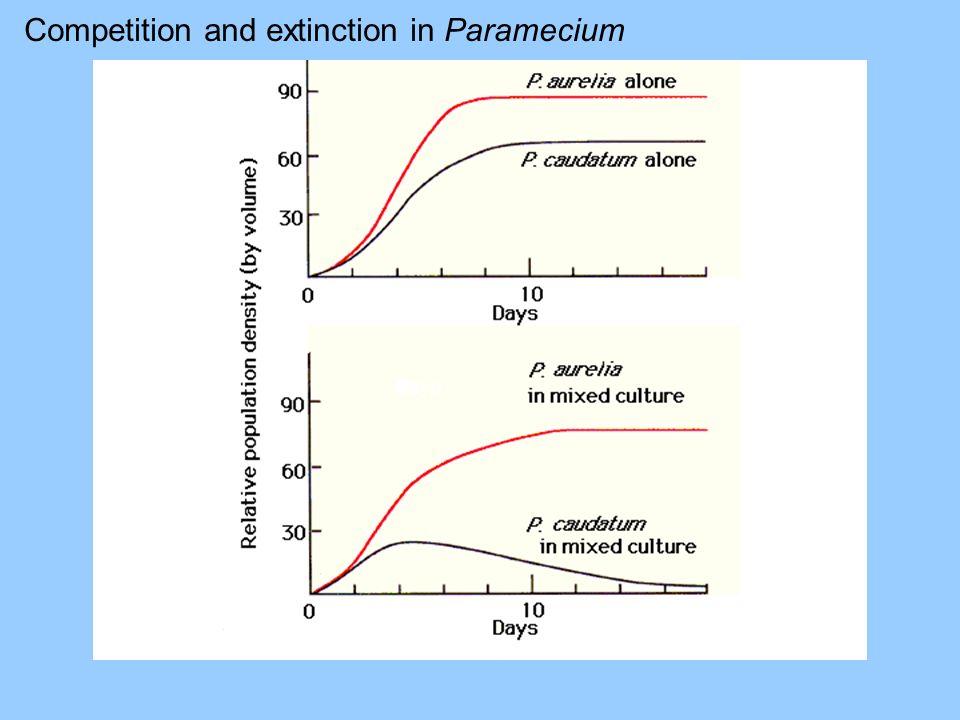 Competition and extinction in Paramecium