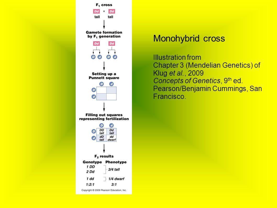 Monohybrid cross Illustration from Chapter 3 (Mendelian Genetics) of Klug et al., 2009 Concepts of Genetics, 9 th ed.