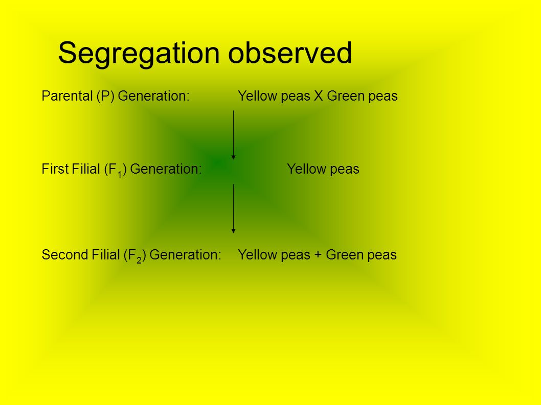 Segregation observed Parental (P) Generation: Yellow peas X Green peas First Filial (F 1 ) Generation:Yellow peas Second Filial (F 2 ) Generation:Yell