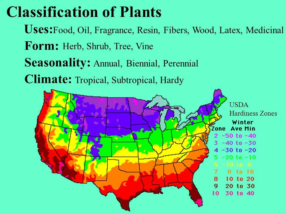 Classification of Plants Uses: Form: Seasonality: Climate: Food, Oil, Fragrance, Resin, Fibers, Wood, Latex, Medicinal Herb, Shrub, Tree, Vine Annual,