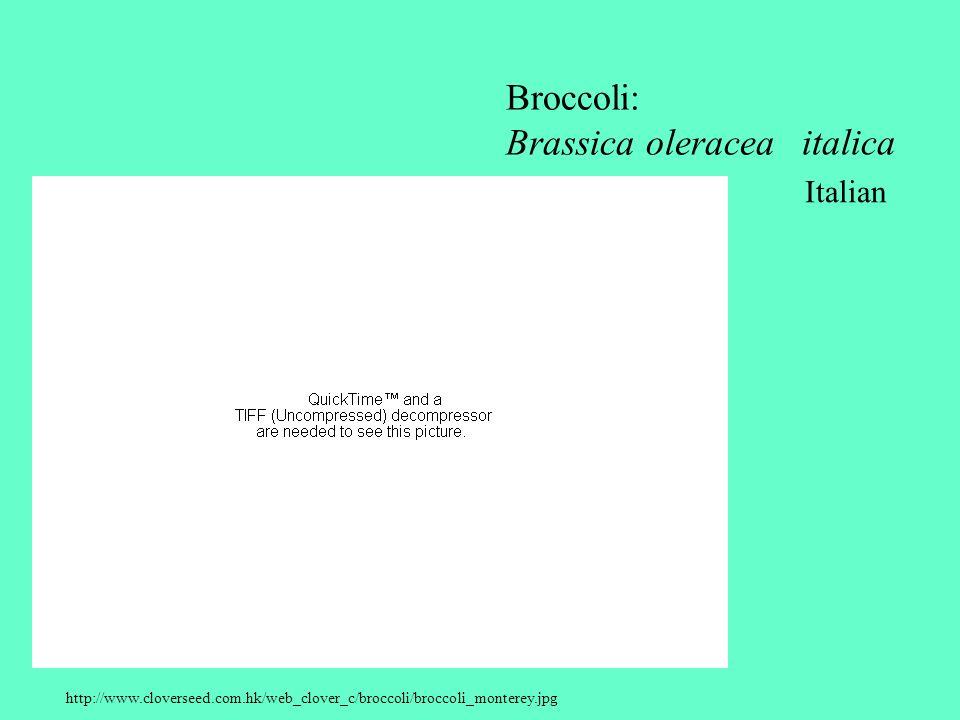 http://www.cloverseed.com.hk/web_clover_c/broccoli/broccoli_monterey.jpg Broccoli: Brassica oleracea italica Italian