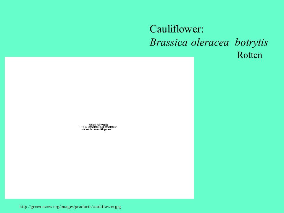 http://green-acres.org/images/products/cauliflower.jpg Cauliflower: Brassica oleracea botrytis Rotten