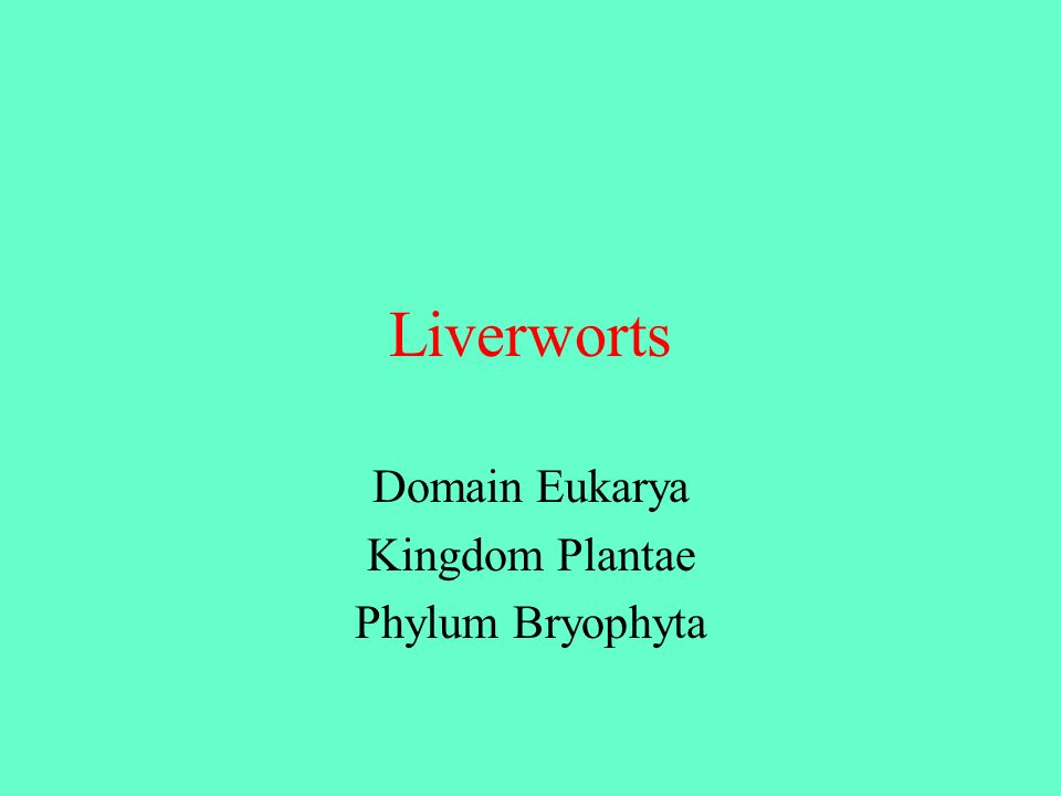 Liverworts Domain Eukarya Kingdom Plantae Phylum Bryophyta
