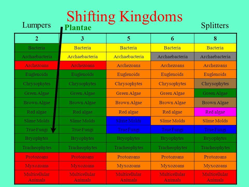 Shifting Kingdoms 23568 Bacteria Archaebacteria Archezoans Euglenoids Chrysophytes Green Algae Brown Algae Red algae Slime Molds True Fungi Bryophytes