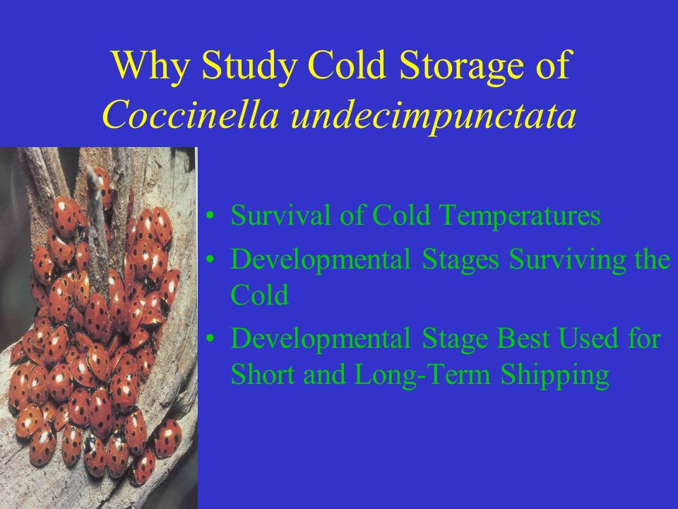 Final Thoughts Eggs, Larval Instars & Pupae Survived Short-Term Storage, 7 Days Adult Storage More Long-Term, 45 Days Due to Diapause Simple Method for Storing Large Numbers Easy Shipping Synchronization With Insect Pest Suppress Insect Pests When Required