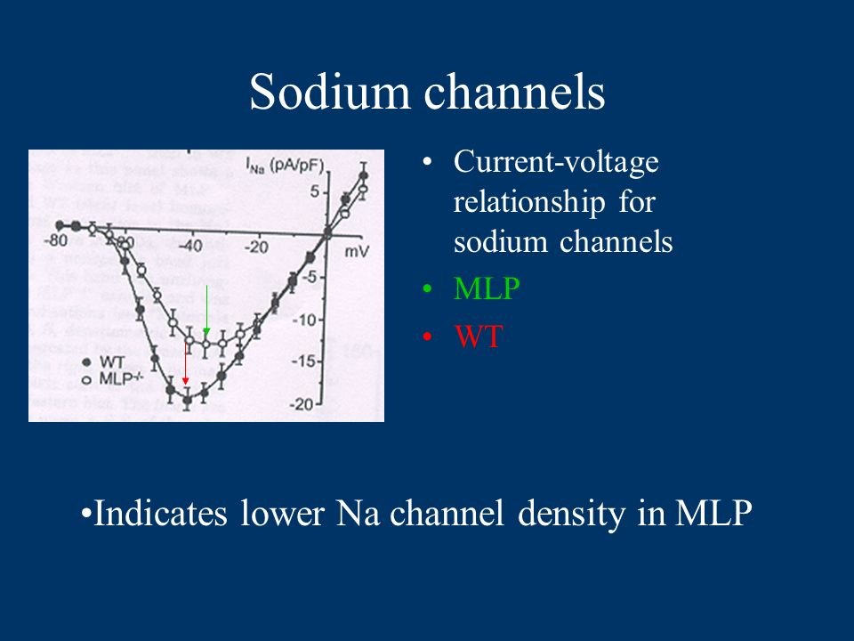 Sodium channels Current-voltage relationship for sodium channels MLP WT Indicates lower Na channel density in MLP