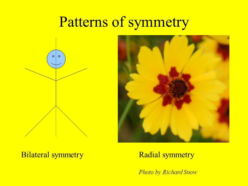 Patterns of symmetry Bilateral symmetryRadial symmetry Photo by Richard Snow