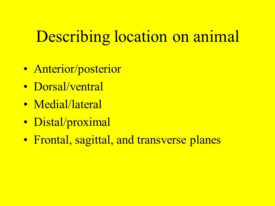 Describing location on animal Anterior/posterior Dorsal/ventral Medial/lateral Distal/proximal Frontal, sagittal, and transverse planes