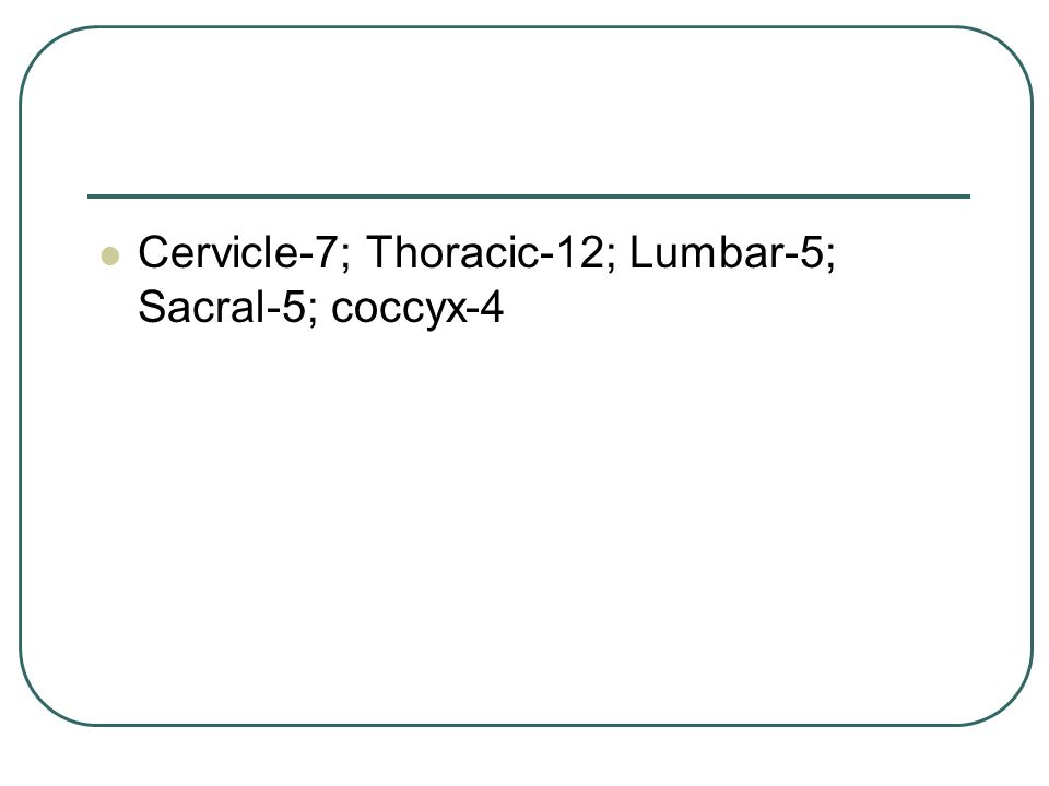 Cervicle-7; Thoracic-12; Lumbar-5; Sacral-5; coccyx-4