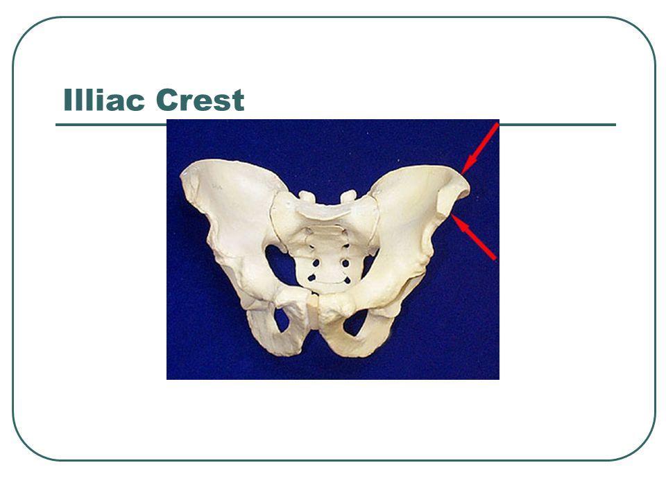 Illiac Crest